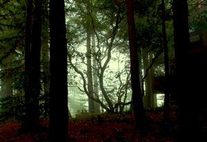 spooky_trees.jpg