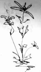 flower_rez.jpg